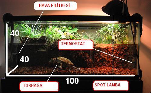 su-kaplumbagasi-bakimi